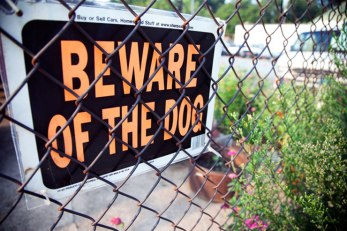 Brooklyn-Street-Art-WEB-Beware-Dog-Copyright-Jenna-Duffy-MG_1152